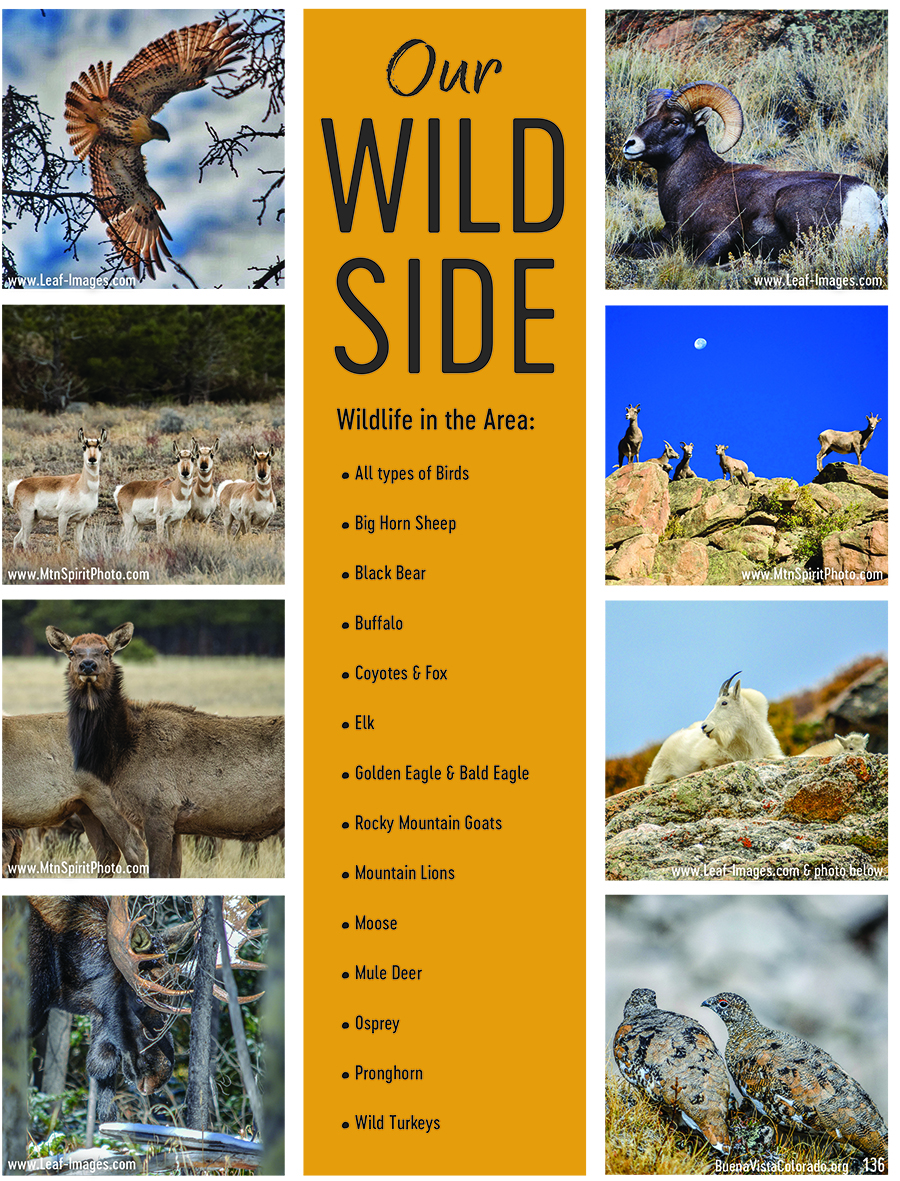 136-Our-wild-side.jpg