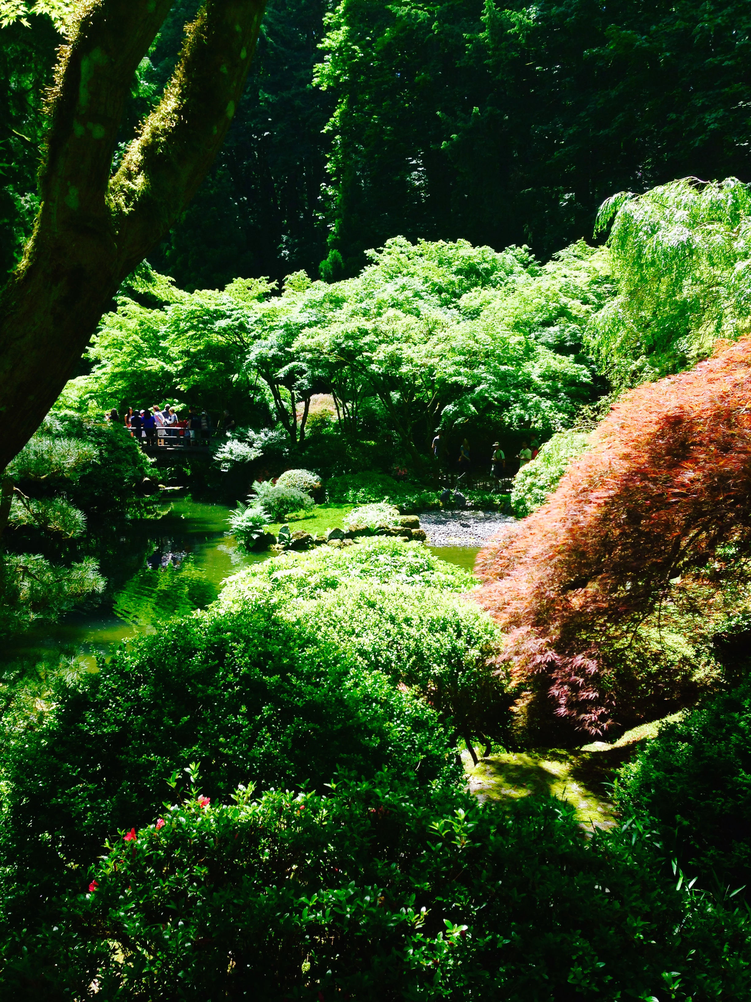 Japanese Gardens 2