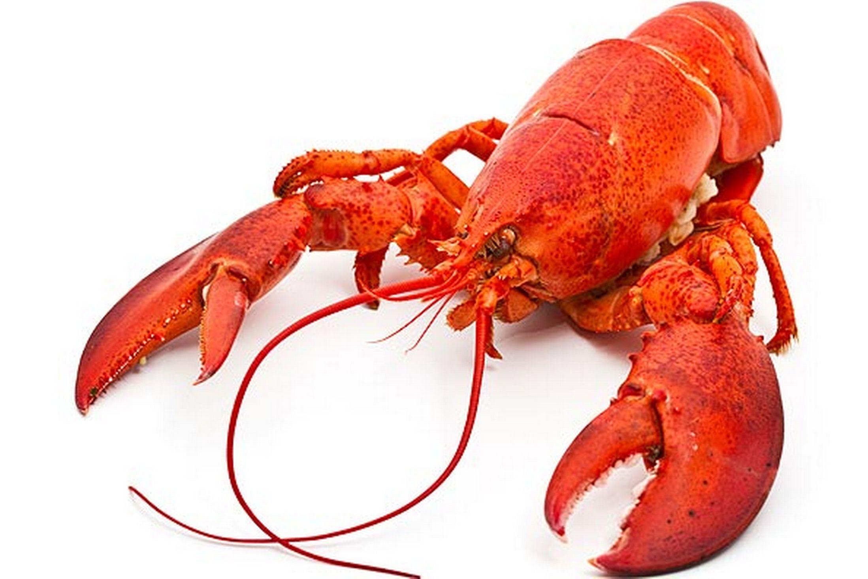 Lobster-9.jpg