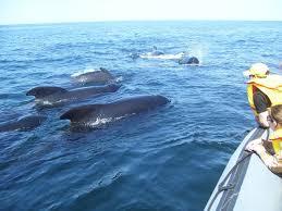 whales.jpeg