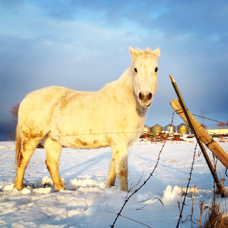 Keeping warm on the winter solstice outside of Bozeman, Montana.  (Photo by Emily Stifler Wolfe)