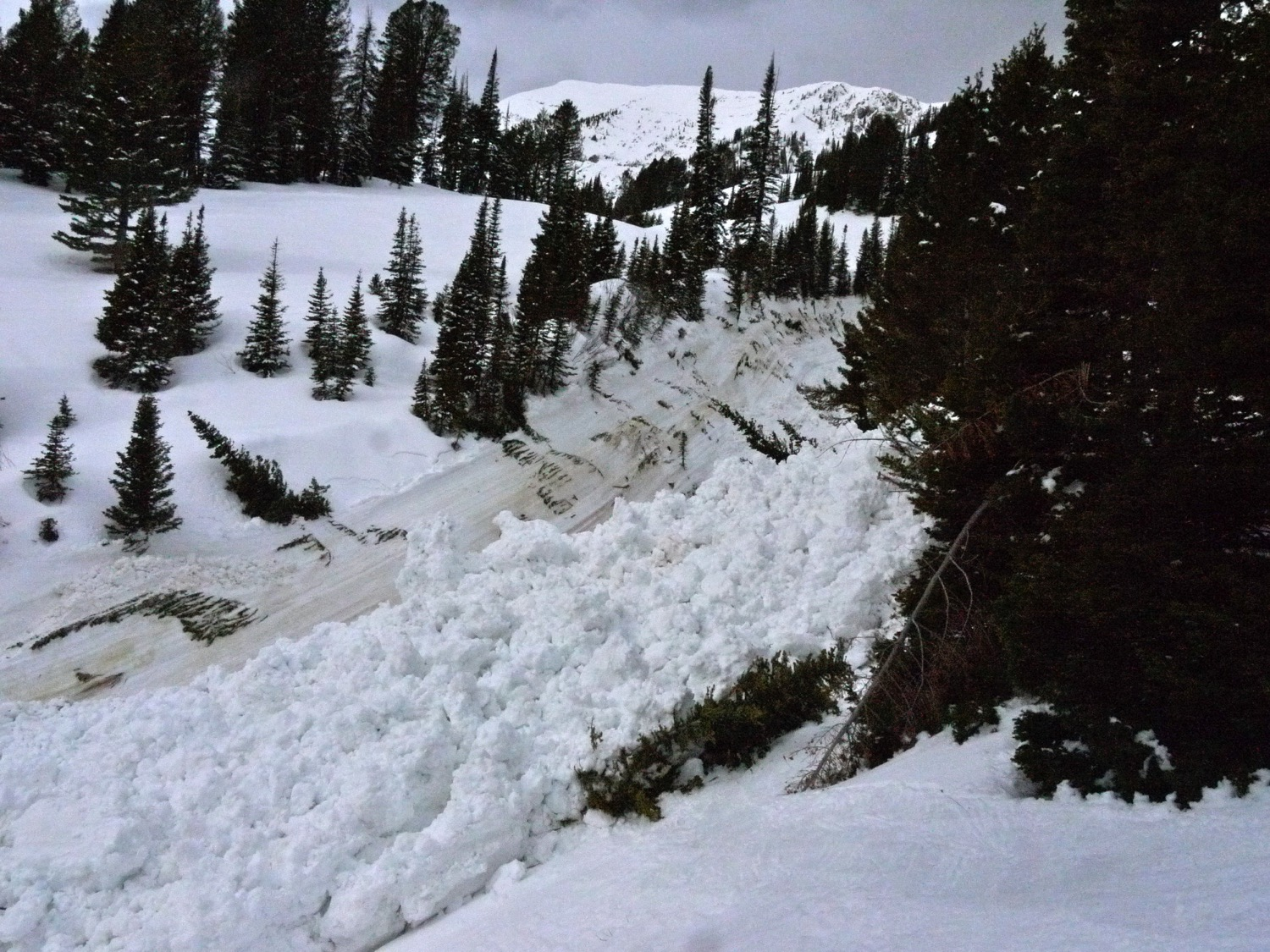 Avalanche debris from the destructive wet slide cycle of 2011, at Bridger Bowl. (Photo by Emily Stifler Wolfe)