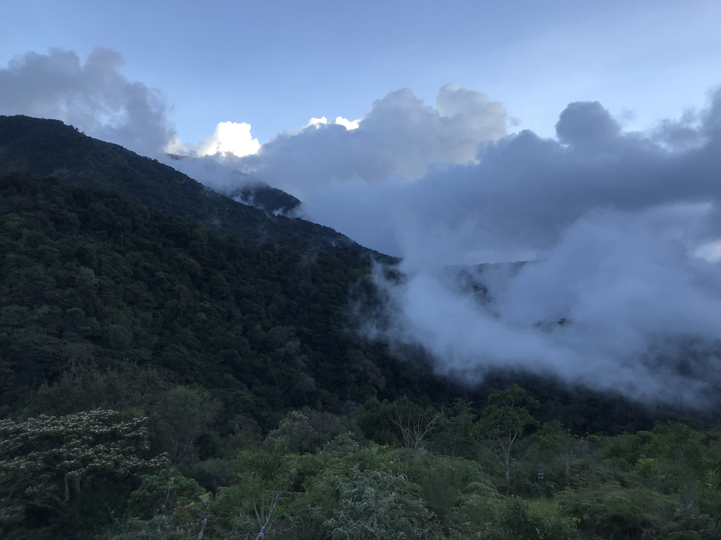 View from the balcony of the Cloud Forest Lodge. No pictures will do it justice.