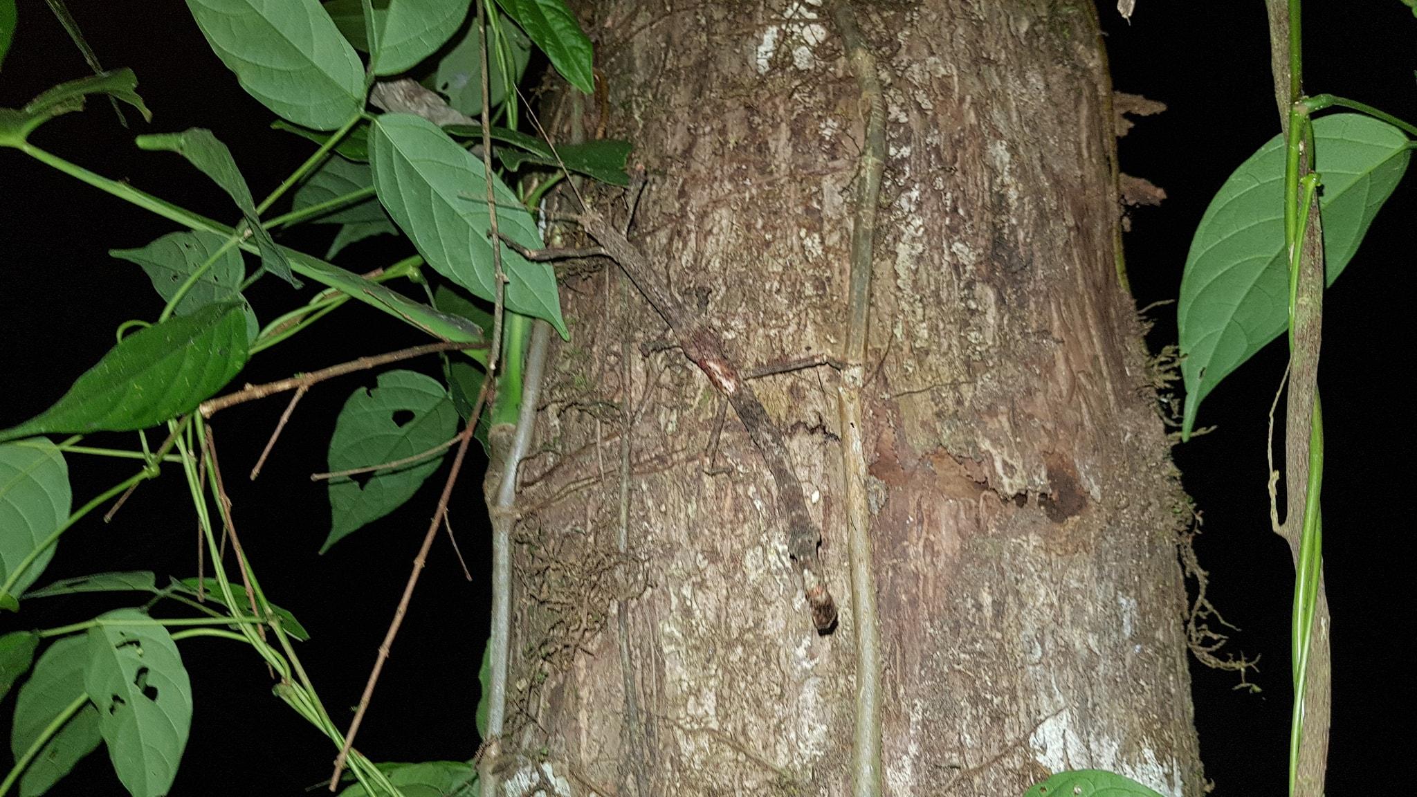 """A """"friend"""" Darren found on the way down in the dark. Photo: Darren Grigas"""