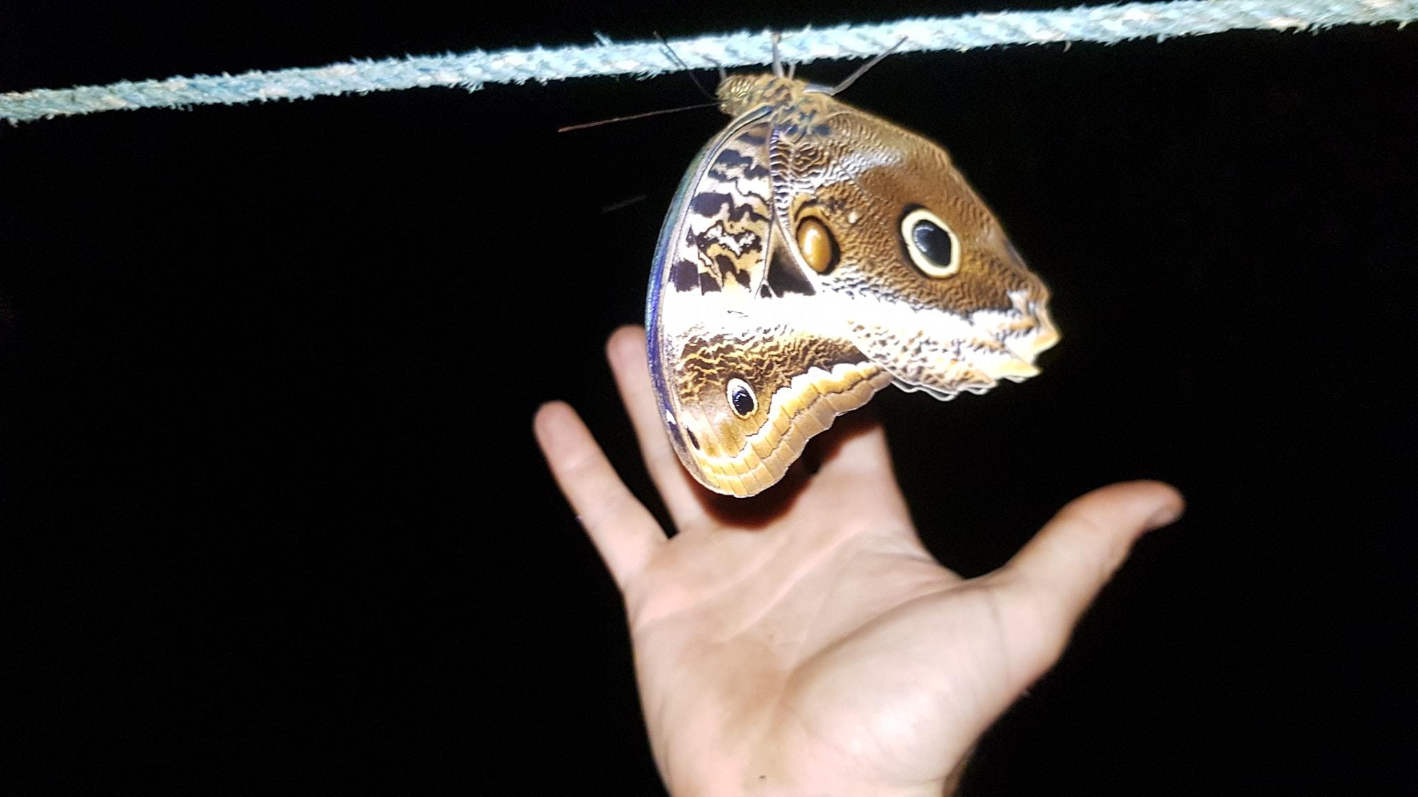 My butterfly pal. Photo: Darren Grigas