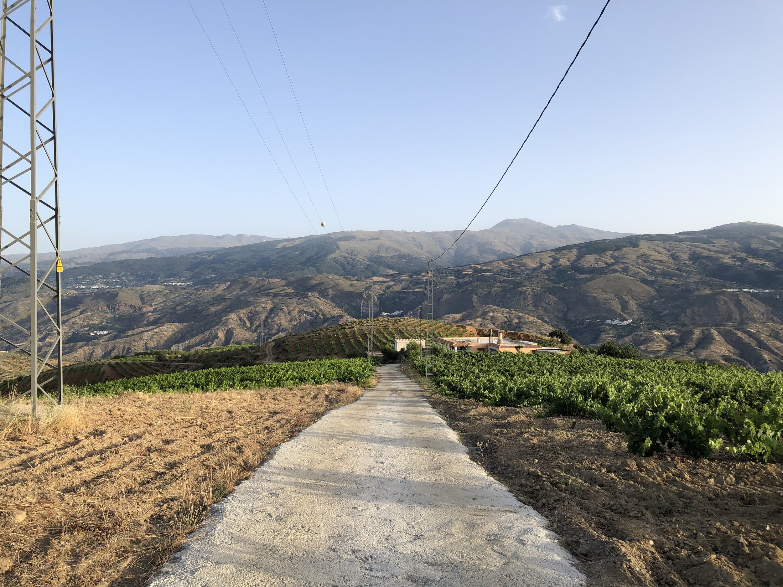 Dem vineyards though…..