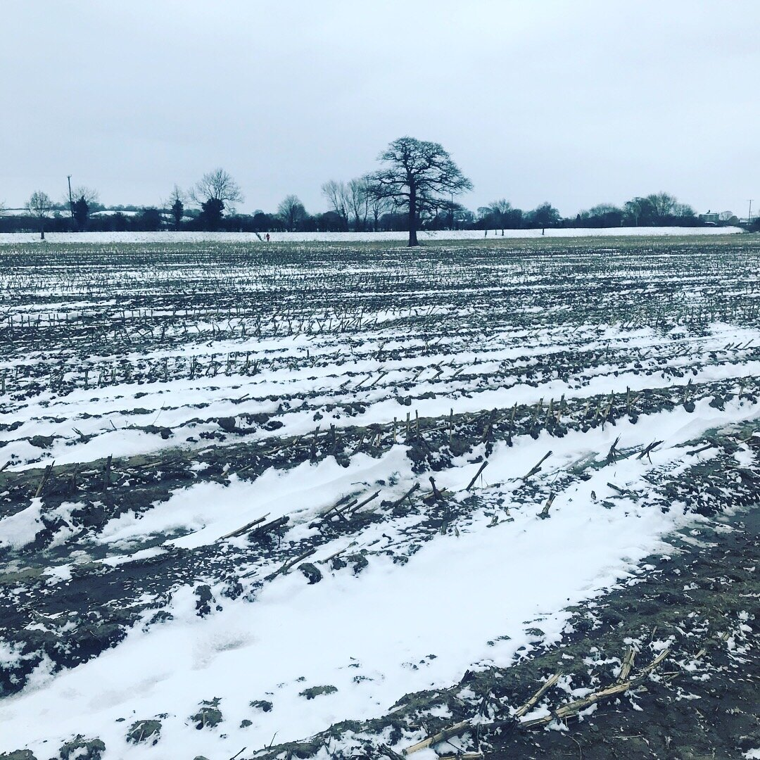 Heres a picture of the Millennium Way 50 from a couple of years ago. This is a field of semi frozen shit and mud. There was a lot of this. It can't be as bad as this.