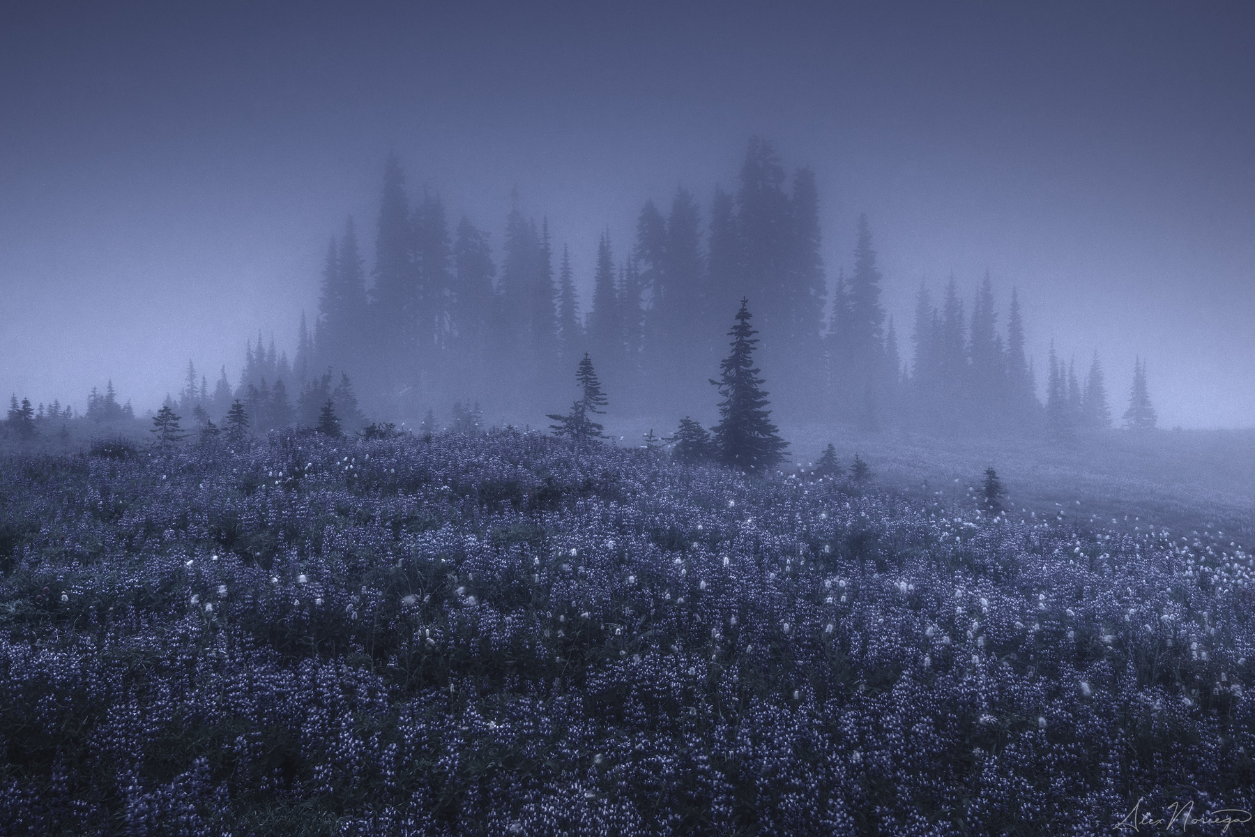 THE BLIND FOREST