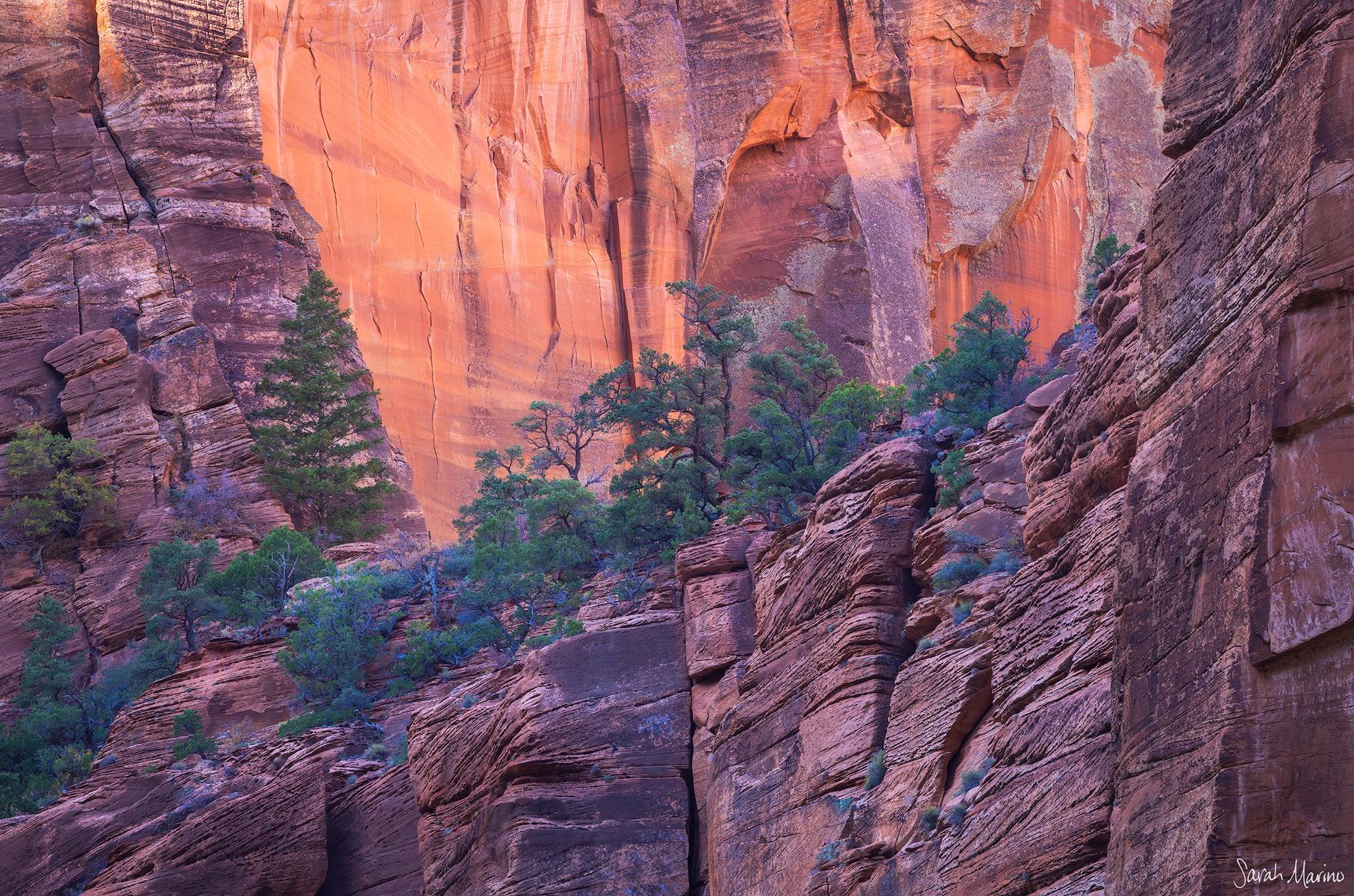 Sarah-Marino-Zion-Perch-Trees-Sandstone-1200px-Watermark.jpg