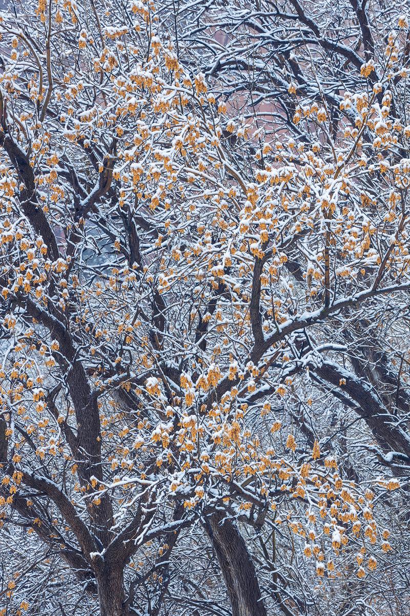 Sarah-Marino-Zion-Winter-Maple-Snow-1200px-Watermark.jpg