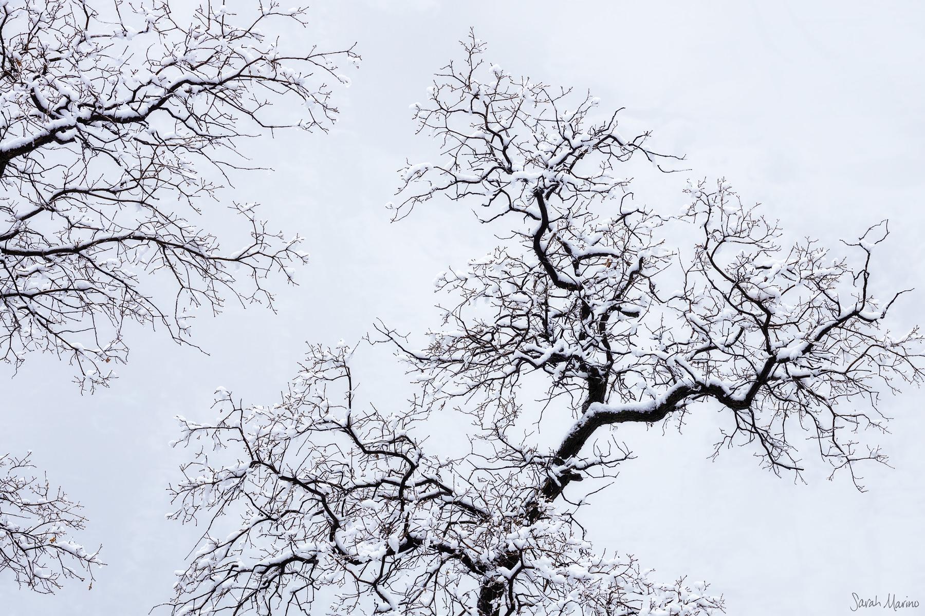 Sarah-Marino-Zion-Winter-Tree-Silhouette-1200px-Watermark.jpg