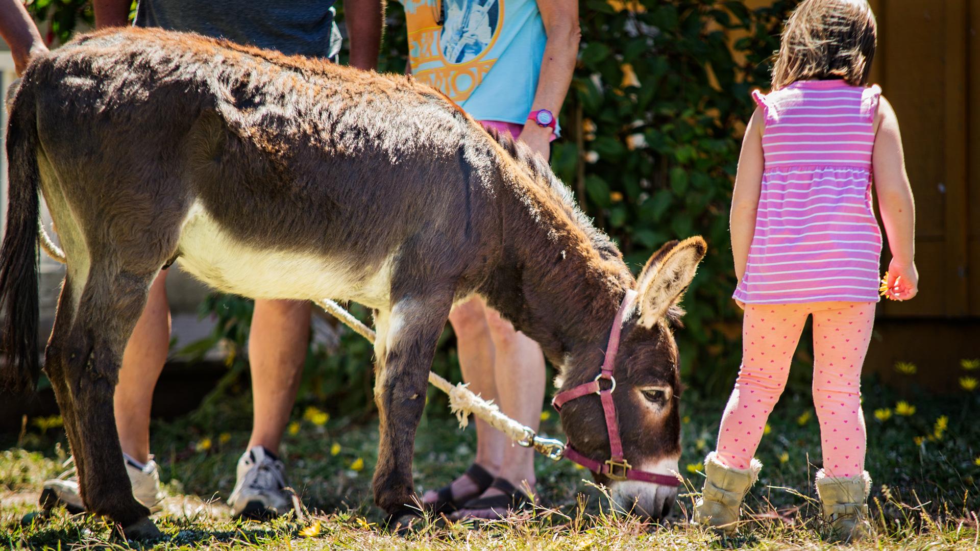 Charlie-Donkey_IMG_2235.jpg