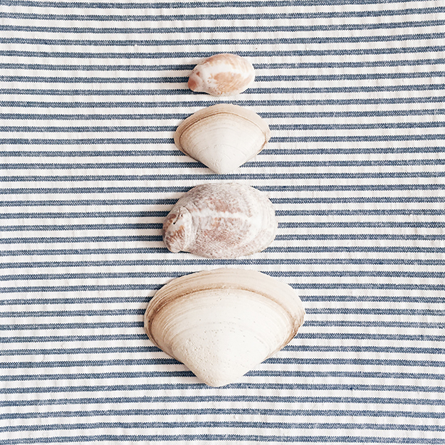 stripes_seashells.jpg
