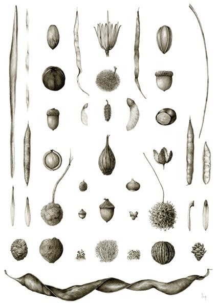 January   Catalpa bignonioides, Quercus montana, Apocynum cannabinum, Liriodendron tulipifera, Carya illinoinensis, Juglans nigra, Carya tomentosa, Castanea dentata, Quercus rubra, Quercus alba, Acer saccharum, Betula lenta var. lenta, Acer saccharinum, Aesculus flava, Cercis canadensis, Carya glabra, Calycanthus floridus, Fagus grandifolia, Robinia pseudoacacia, Fraxinus americana, Fraxinus pennsylvanica, Platanus occidentalis, Quercus phellos, Quercus coccinea, Corylus americana, Hamamelis virginiana, Liquidambar styraciflua, Liriodendron tulipifera, Taxodium distichum, Juglans nigra, Cladonia sp., Flavoparmelia sp., Tsuga canadensis, Gleditsia triacanthos