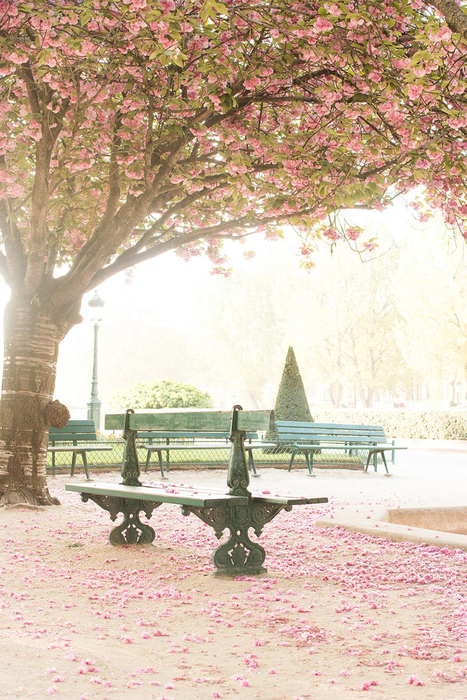 Paris Spring @rebeccaplotnick