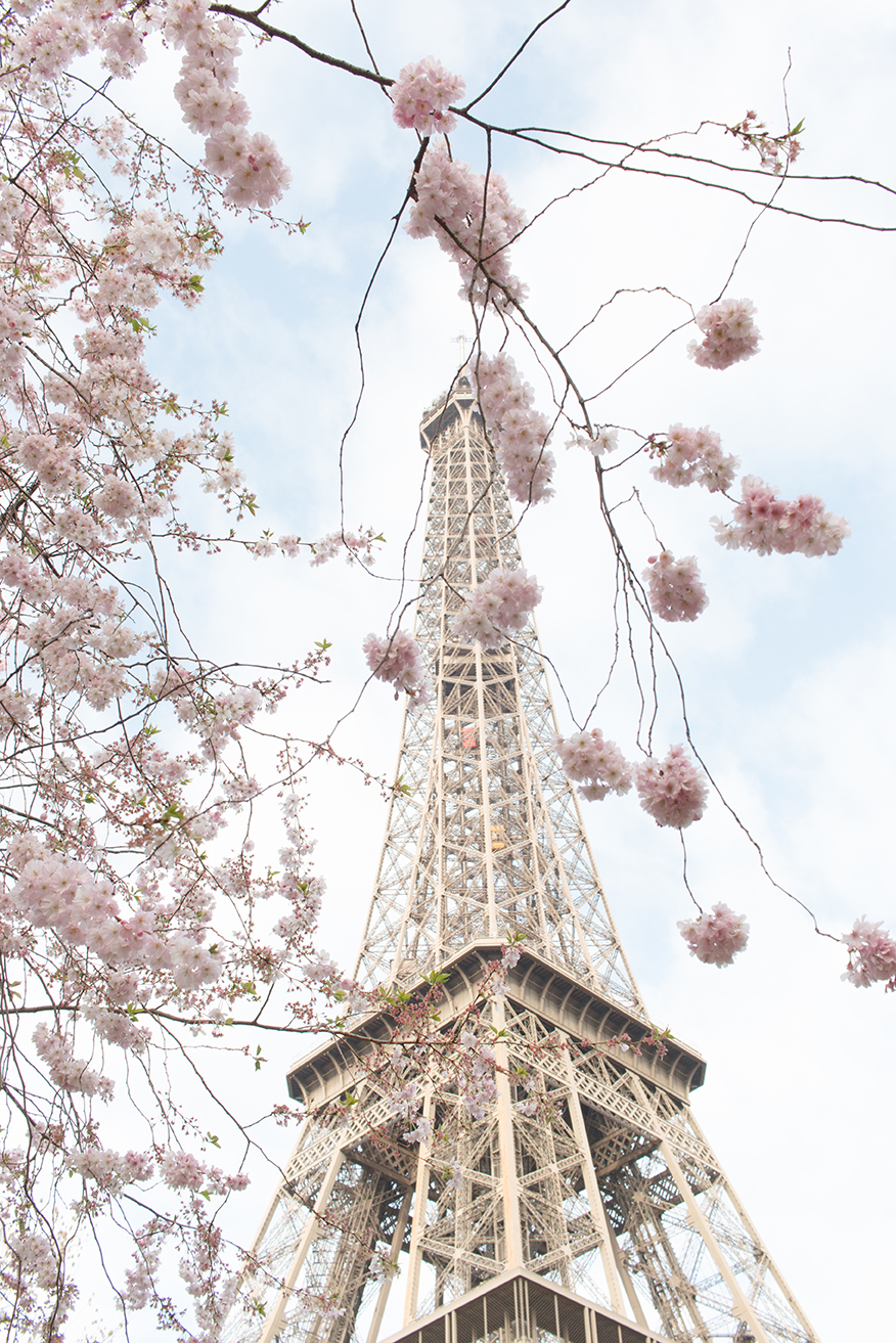 paris spring eiffel tower rebecca plotnick
