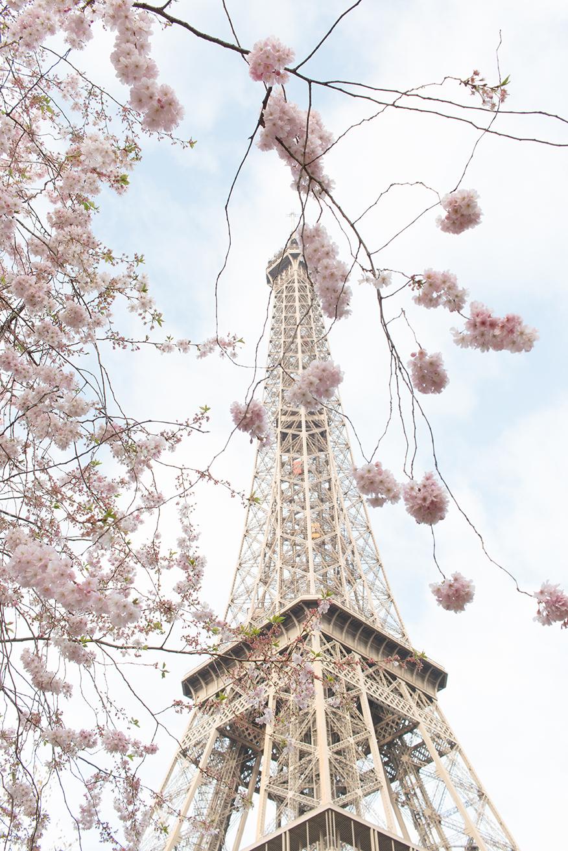 paris spring eiffel tower rebecca plotnick