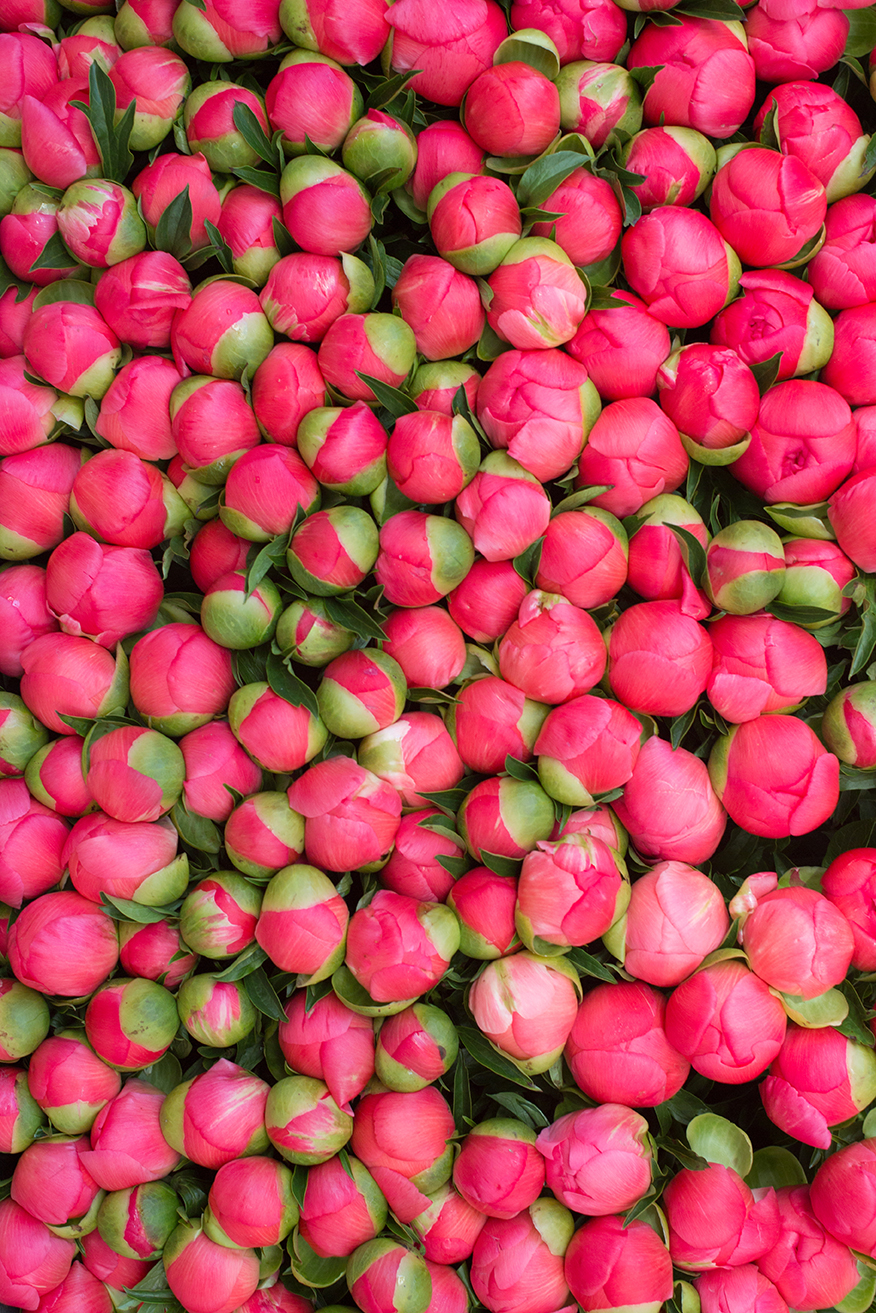 pink peonies in paris at the market via everyday parisian
