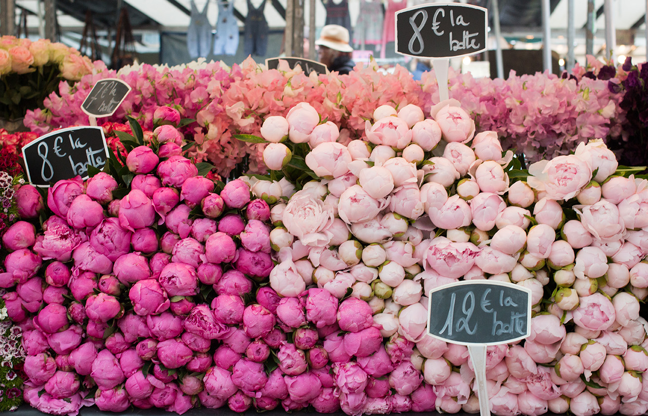 pink peonies at the market in Paris, France by Rebecca Plotnick