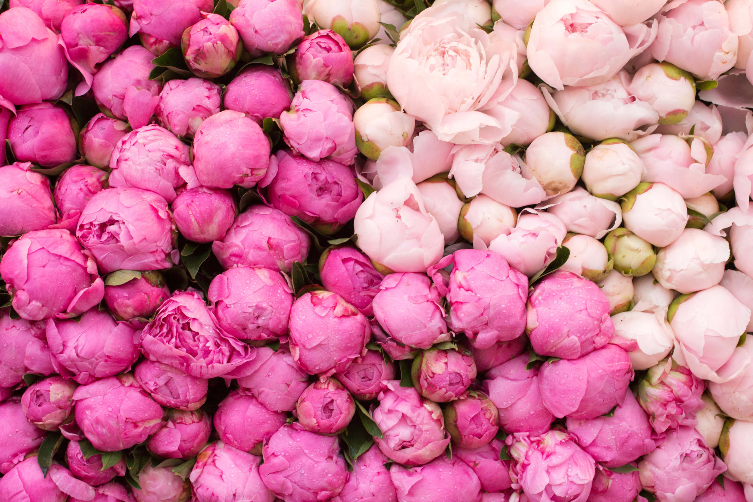 where to find peonies in Paris
