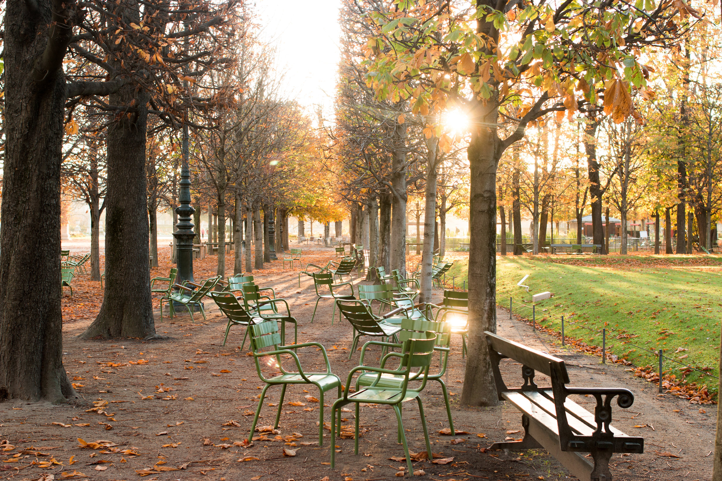 paris in the autumn by rebecca plotnick
