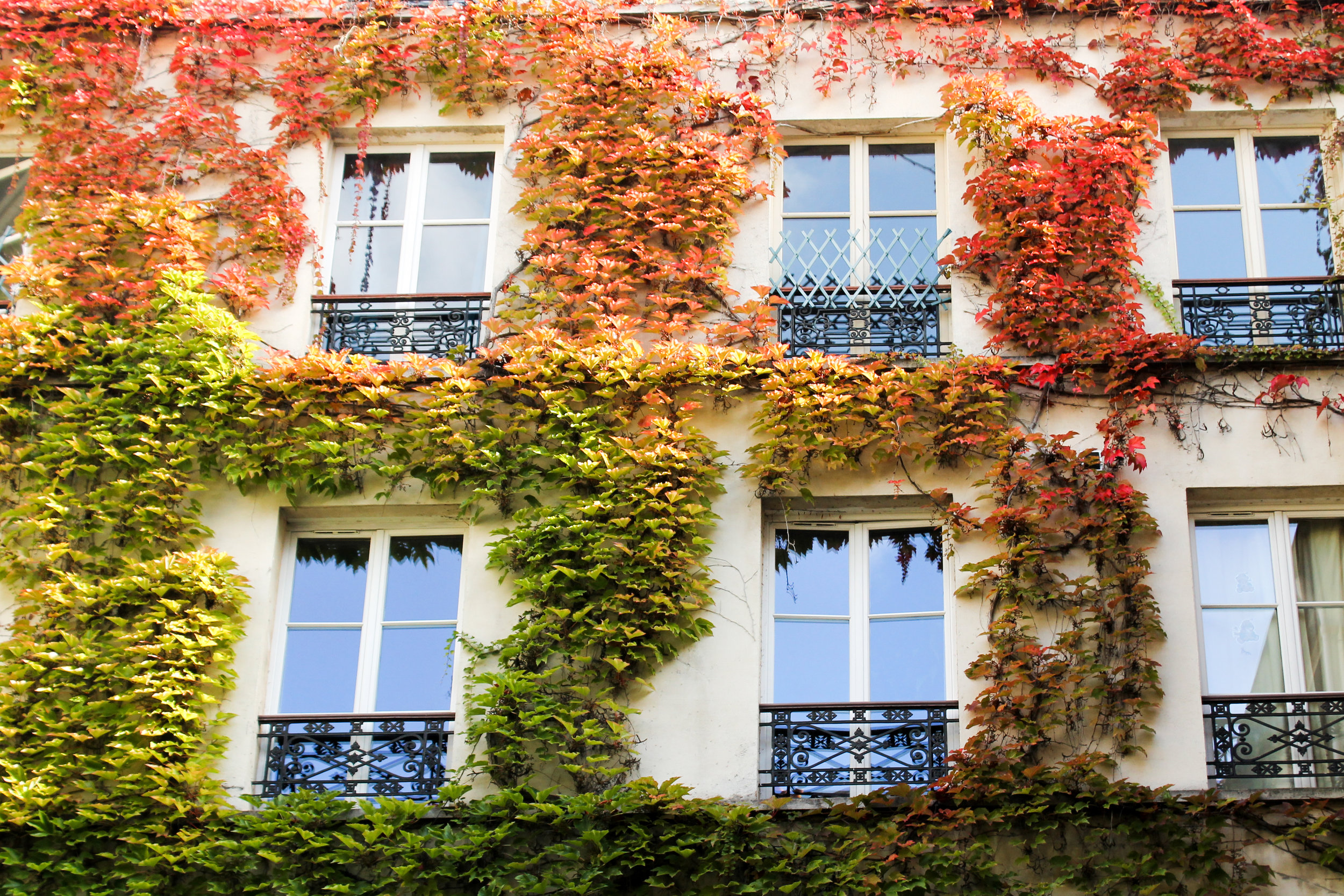 fall in paris by rebecca plotnick