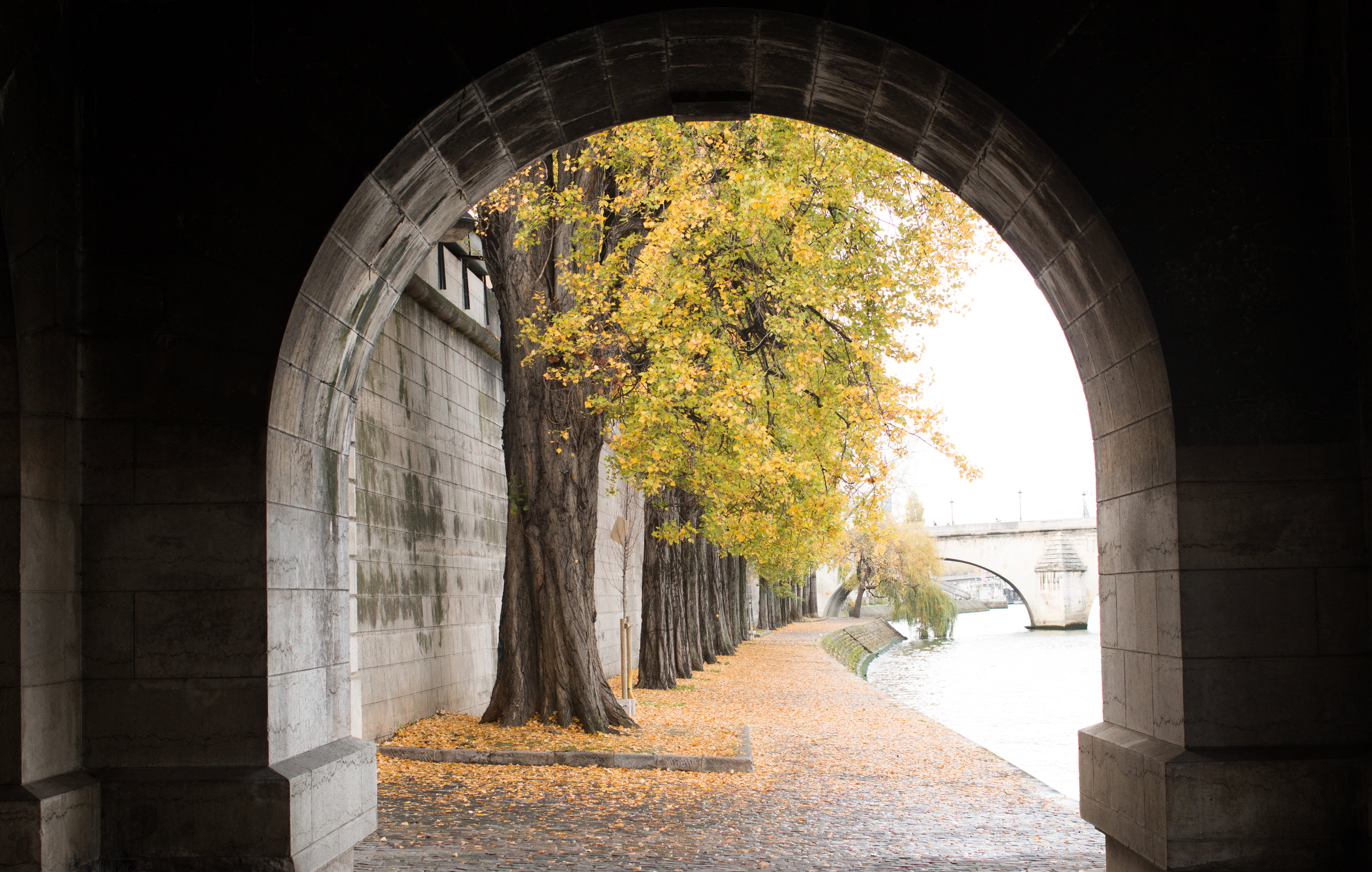 paris autumn on the seine rebecca plotnick
