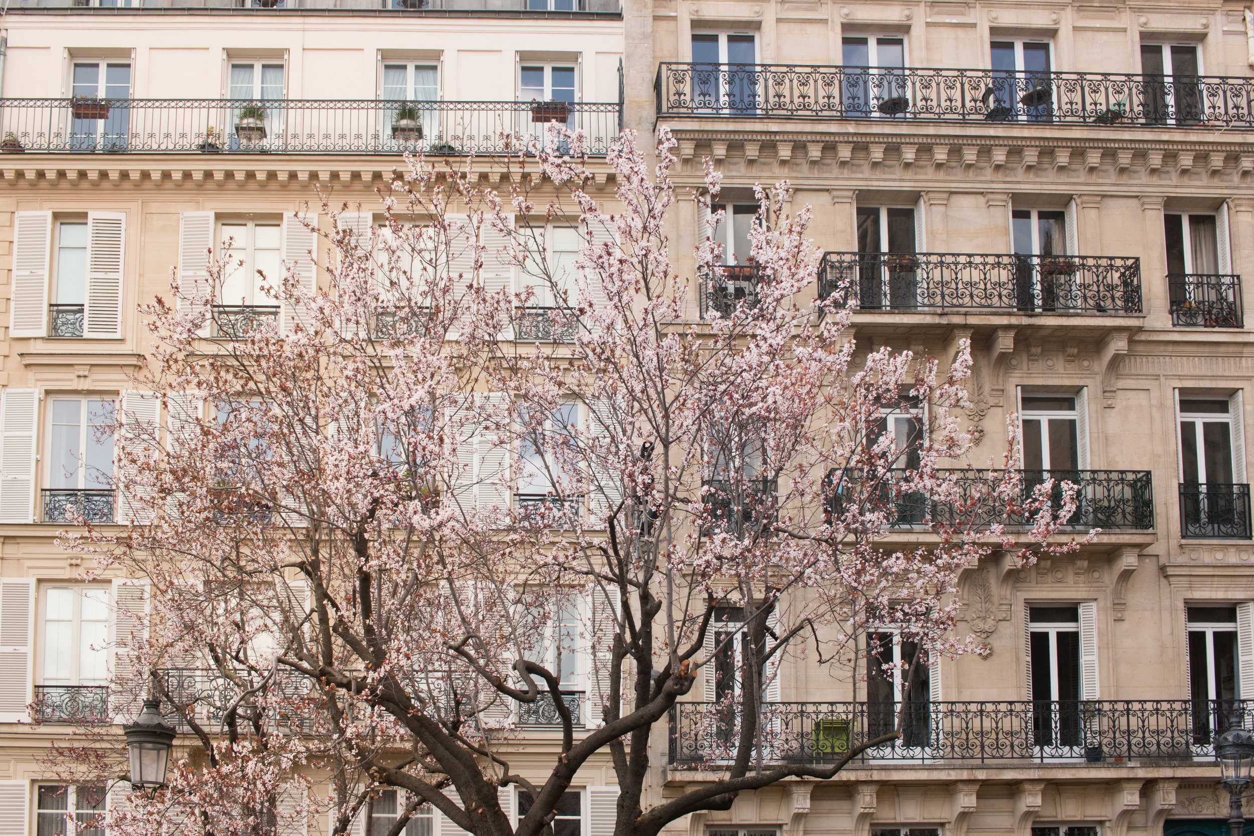 spring in paris everyday parisian