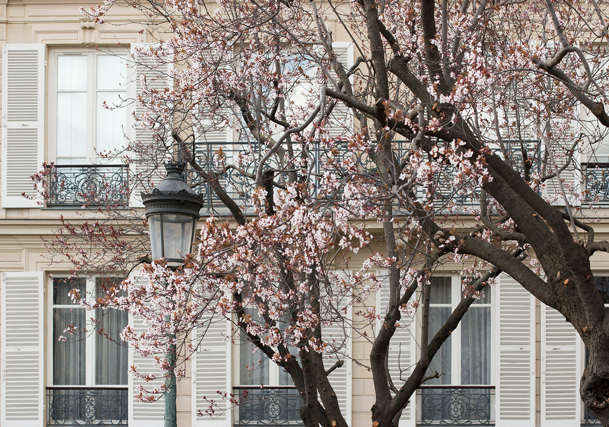 everyday parisian spring in paris france by rebecca plotnick
