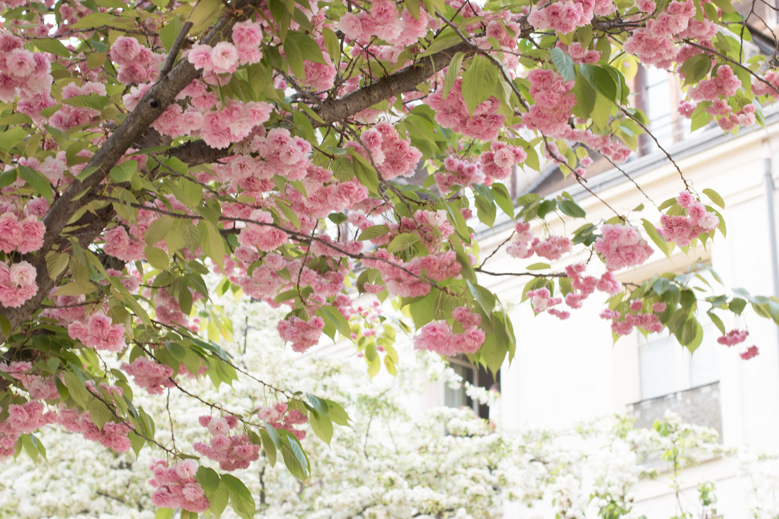 where to see paris in bloom