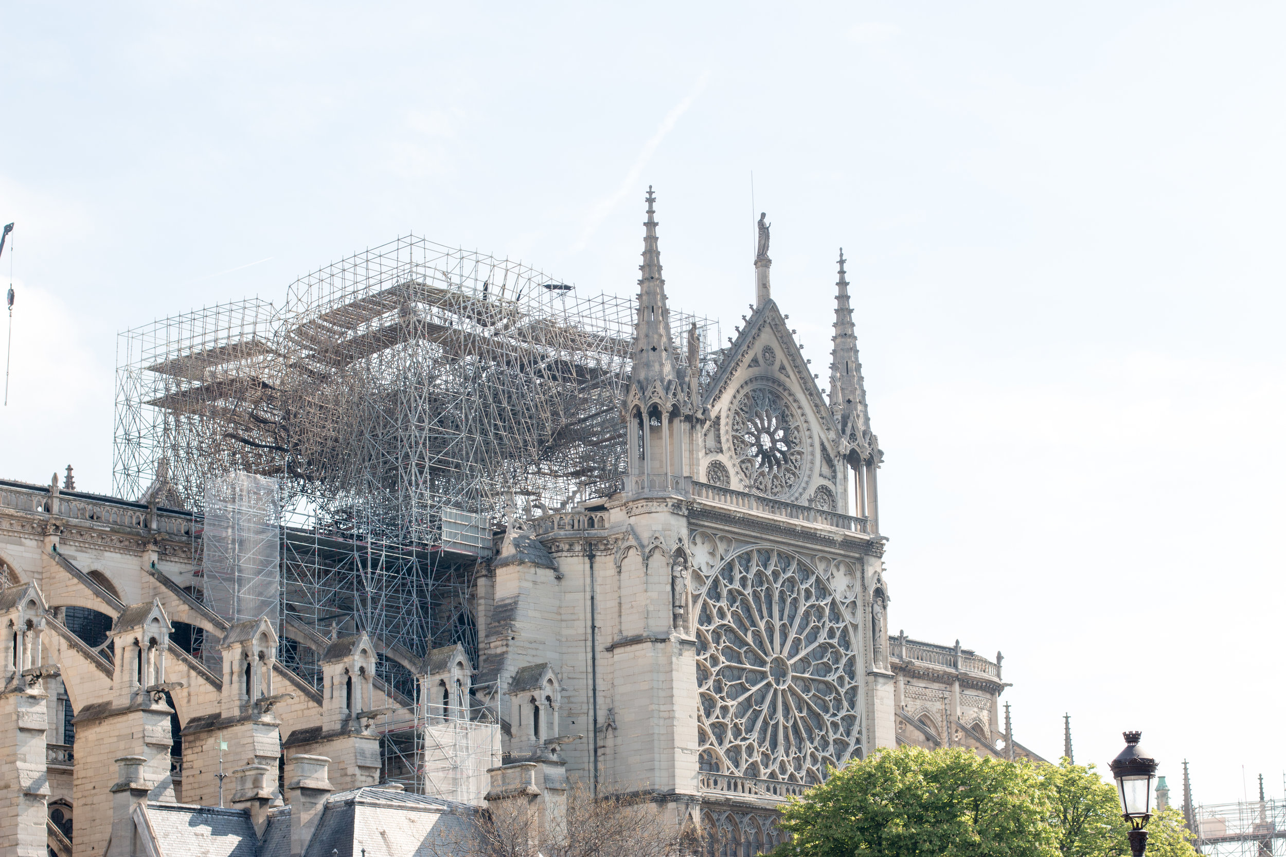 notre dame paris france rebecca plotnick