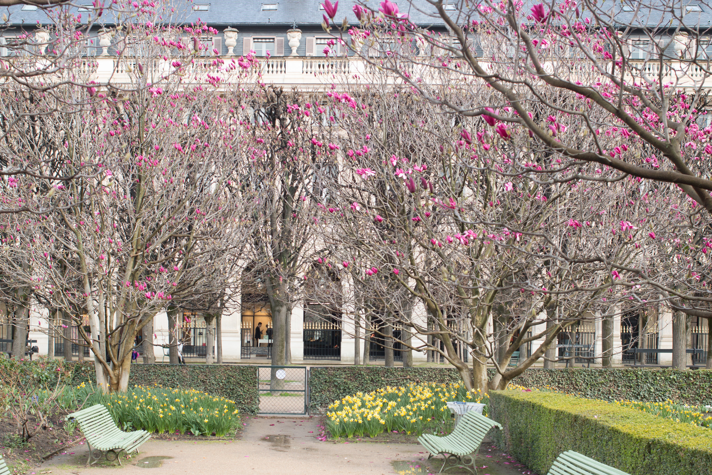 the paris diaries spring everyday parisian palais royal