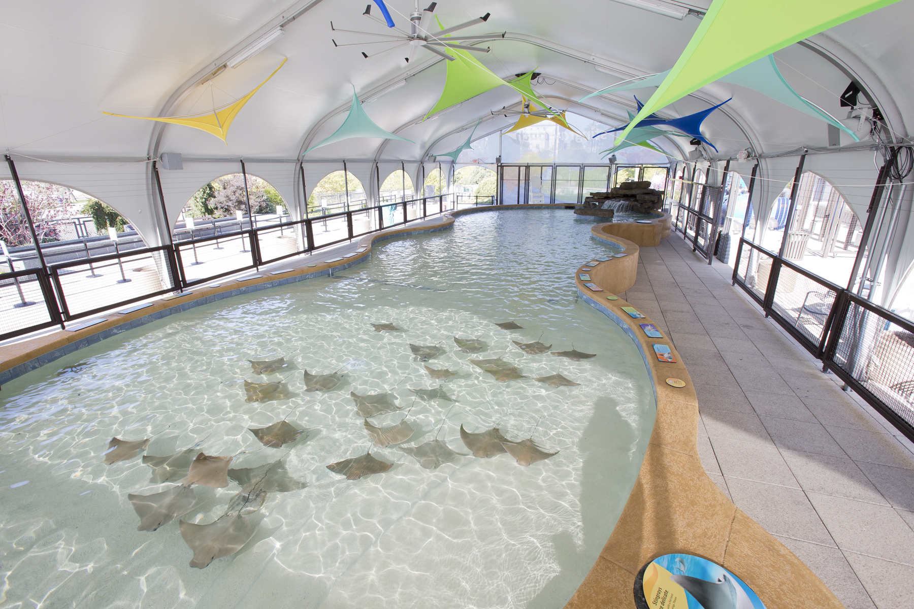 "Shedd Aquarium, ""Stingray Touch"" Experience"