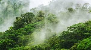 cloudforest.jpg