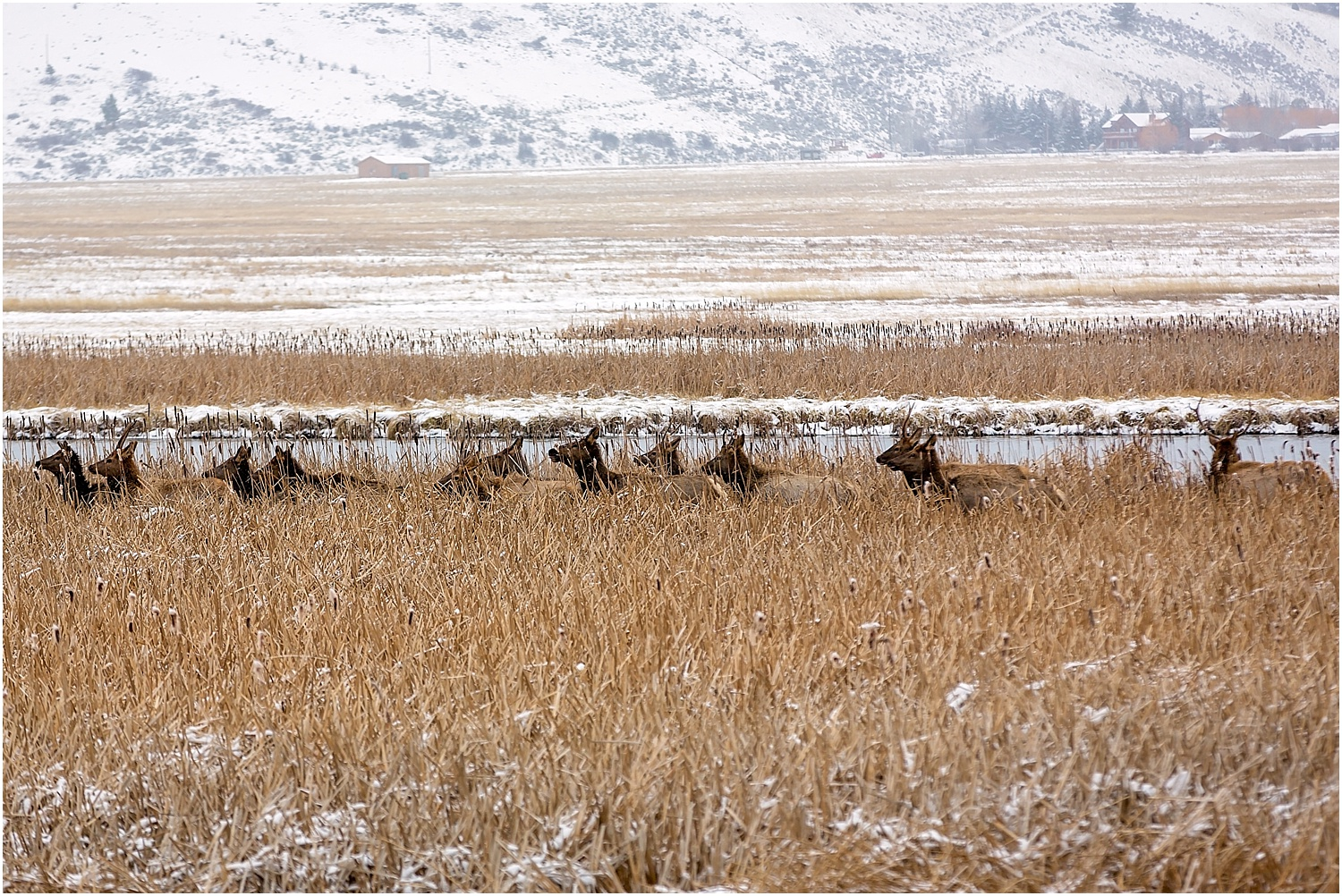 Jackson Wyoming Wildlife Photographer Elk