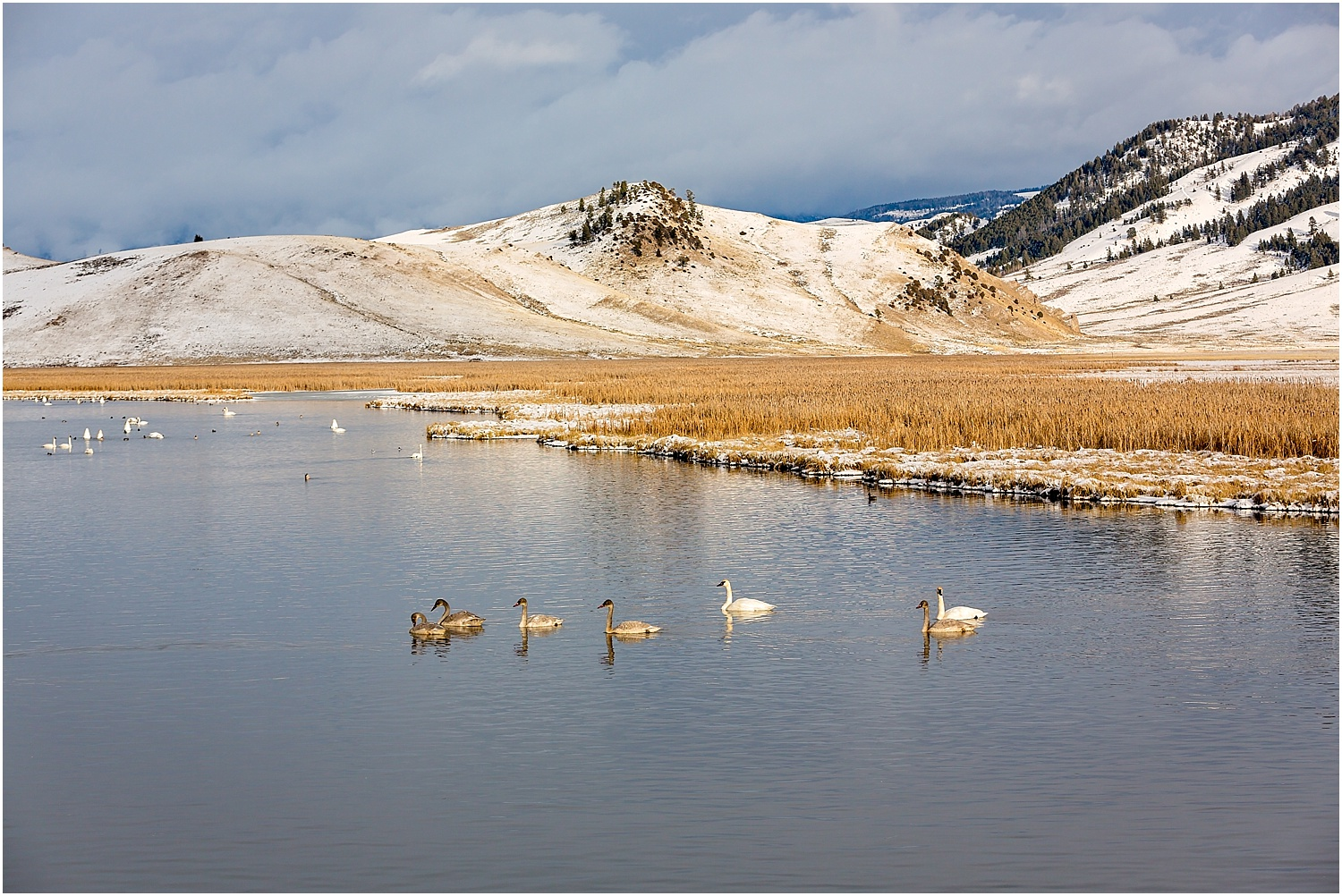 Jackson Wyoming Wildlife Photographer Waterfowl