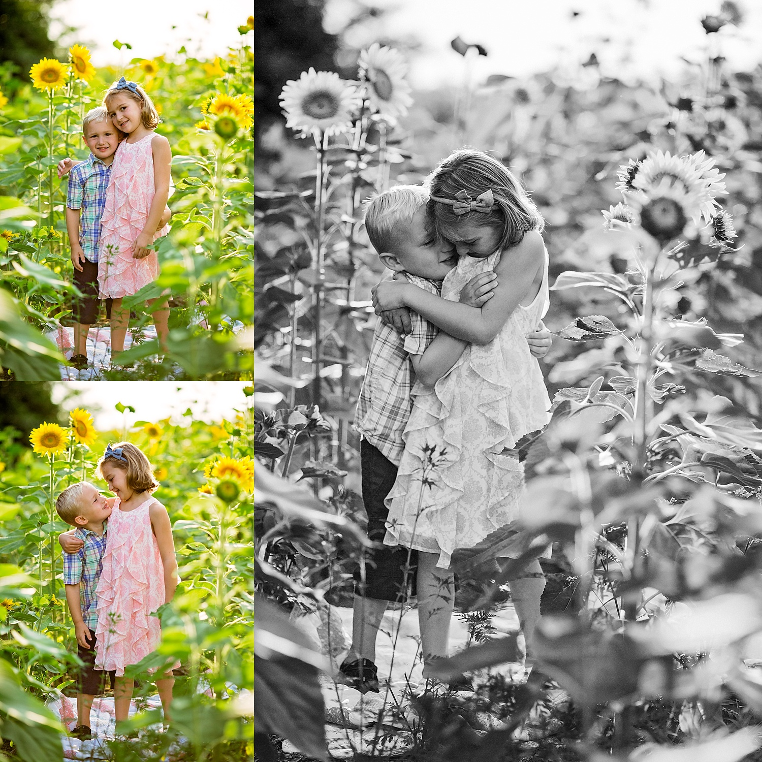Berks County Pennsylvania Blue Marsh Lake Sunflower Field Photoshoot Photographer