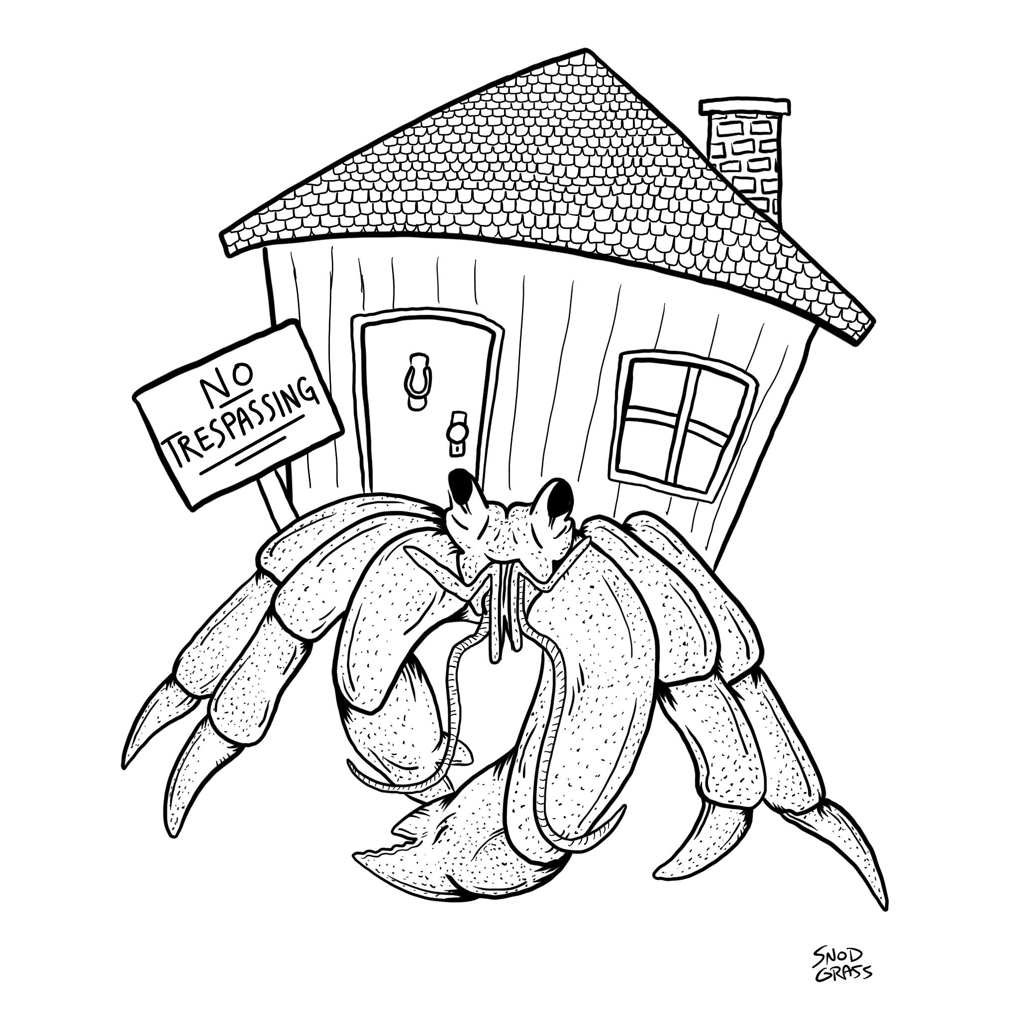 ShyCrab.JPG