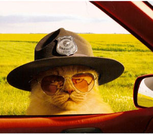 Cat cop wants to know- Is your dog licensed?