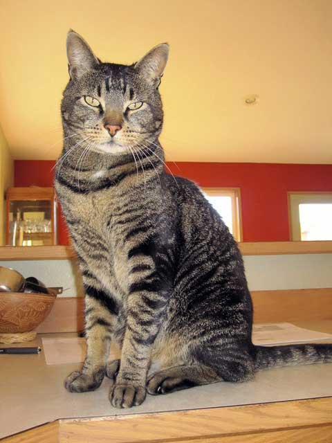 Handsome Tico!