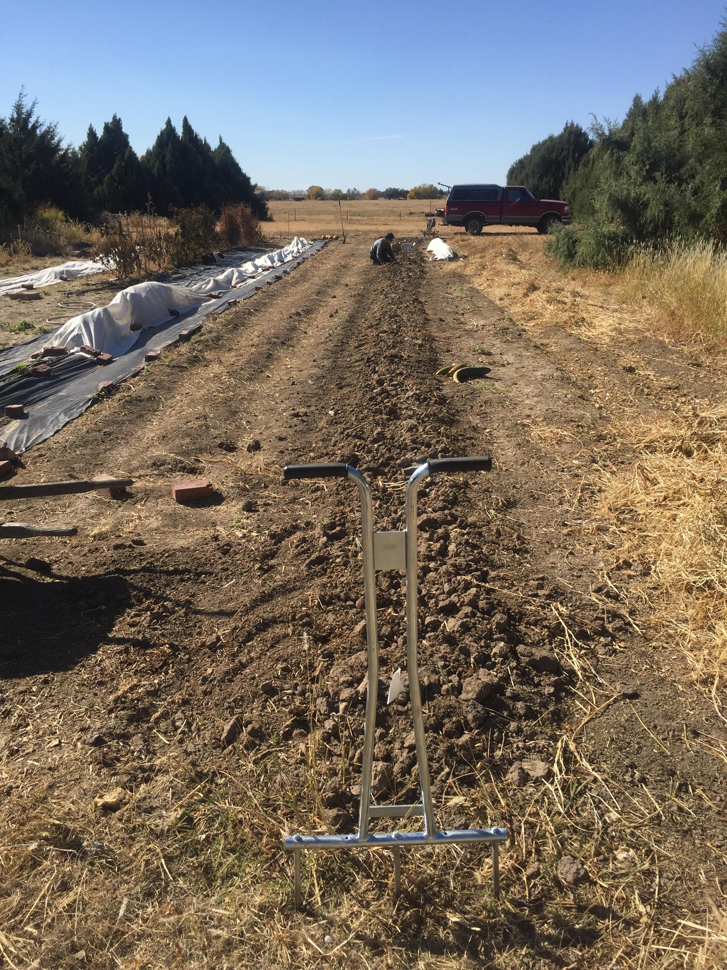 planting garlic fall 2016