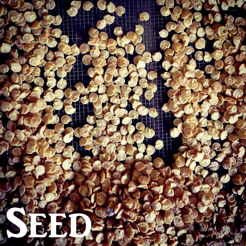 gallery_website_seeds.jpg
