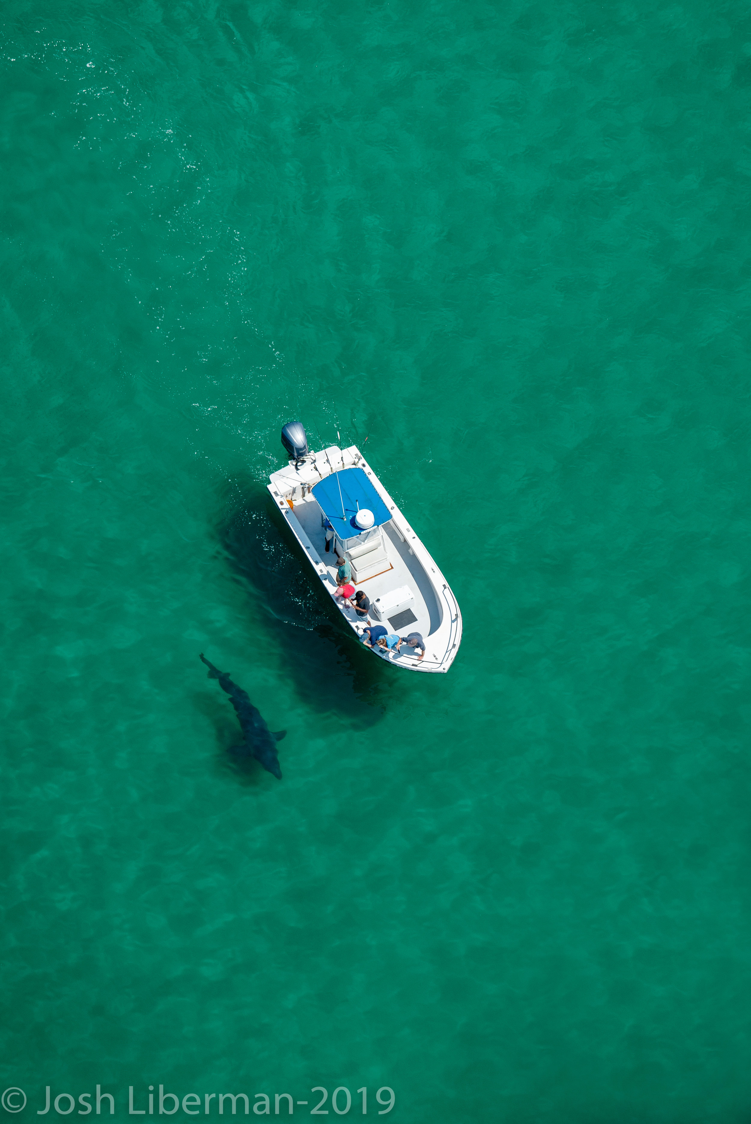 Visitors on an eco-tourism boat get a close look at a large white shark off the coast of Cape Cod.