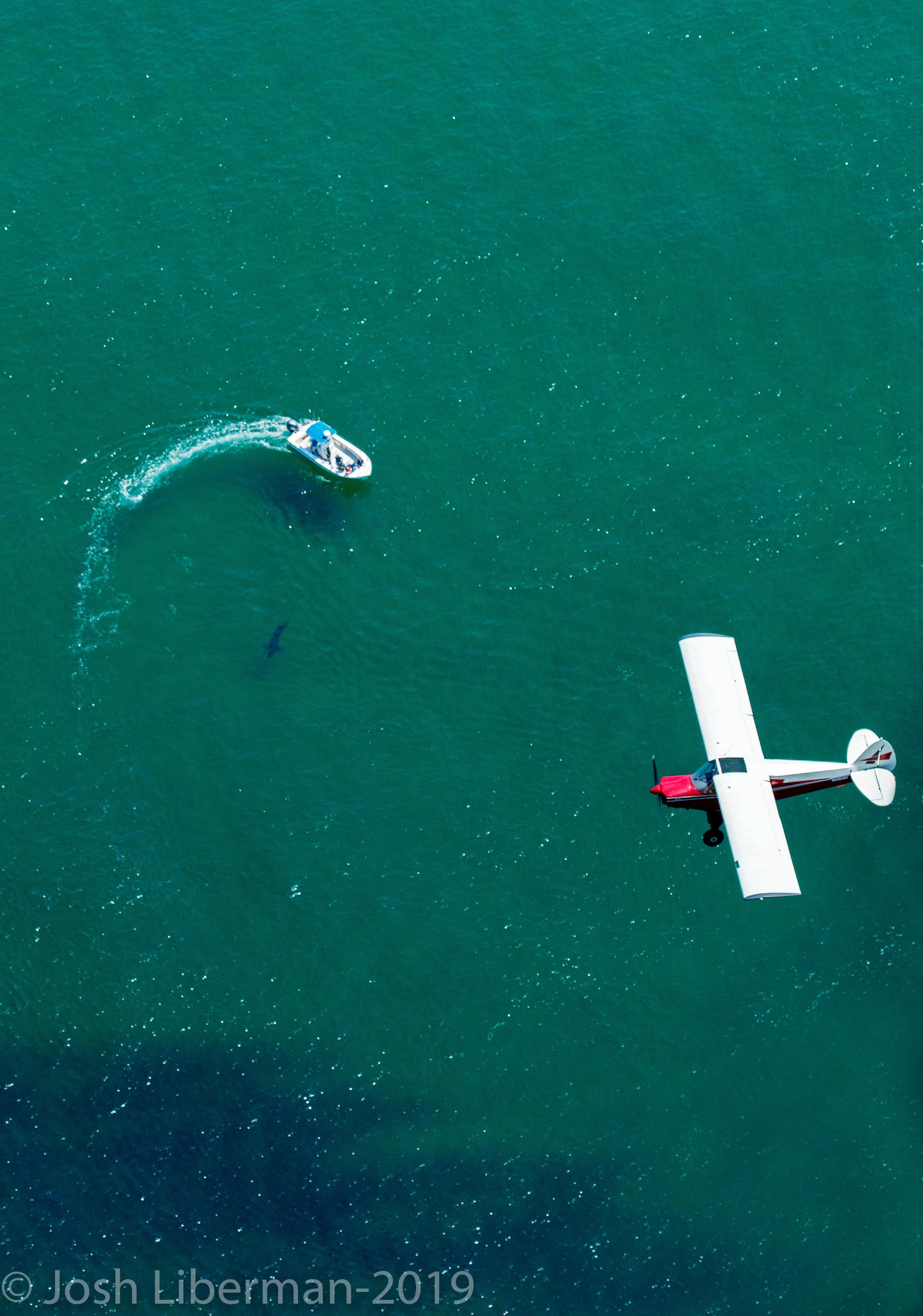 Spotter planes help ecotourism groups find white sharks.