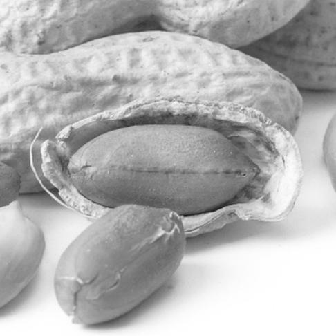 Peanuts in Shell New1.jpg