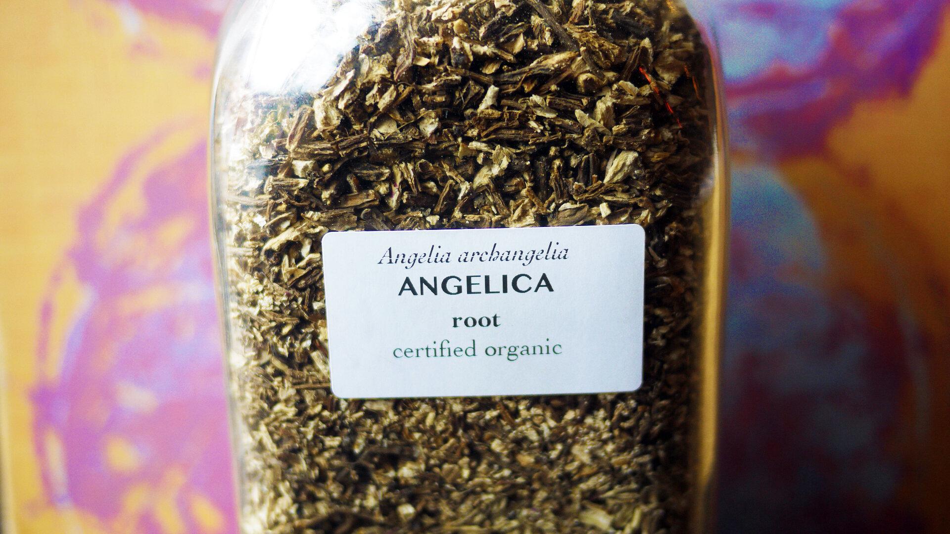 Angelicaroot.jpg