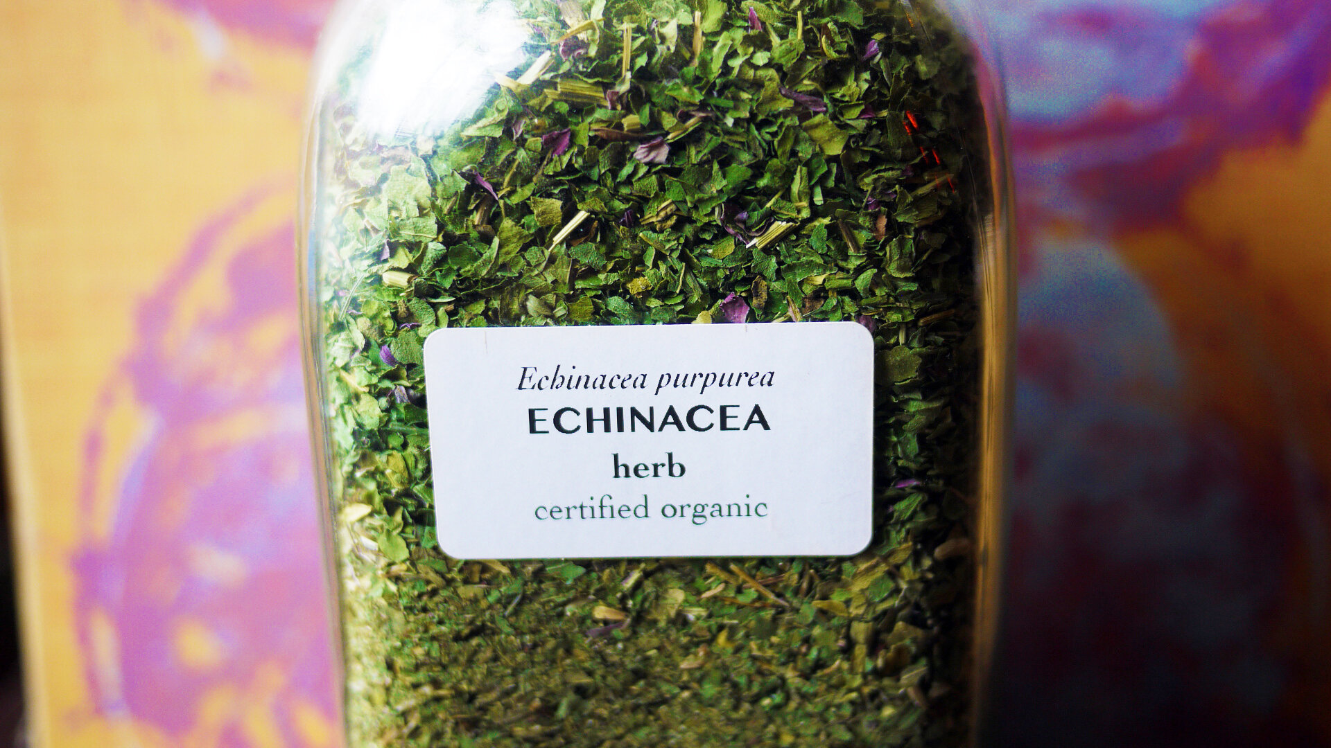 Echinaceaherb.jpg