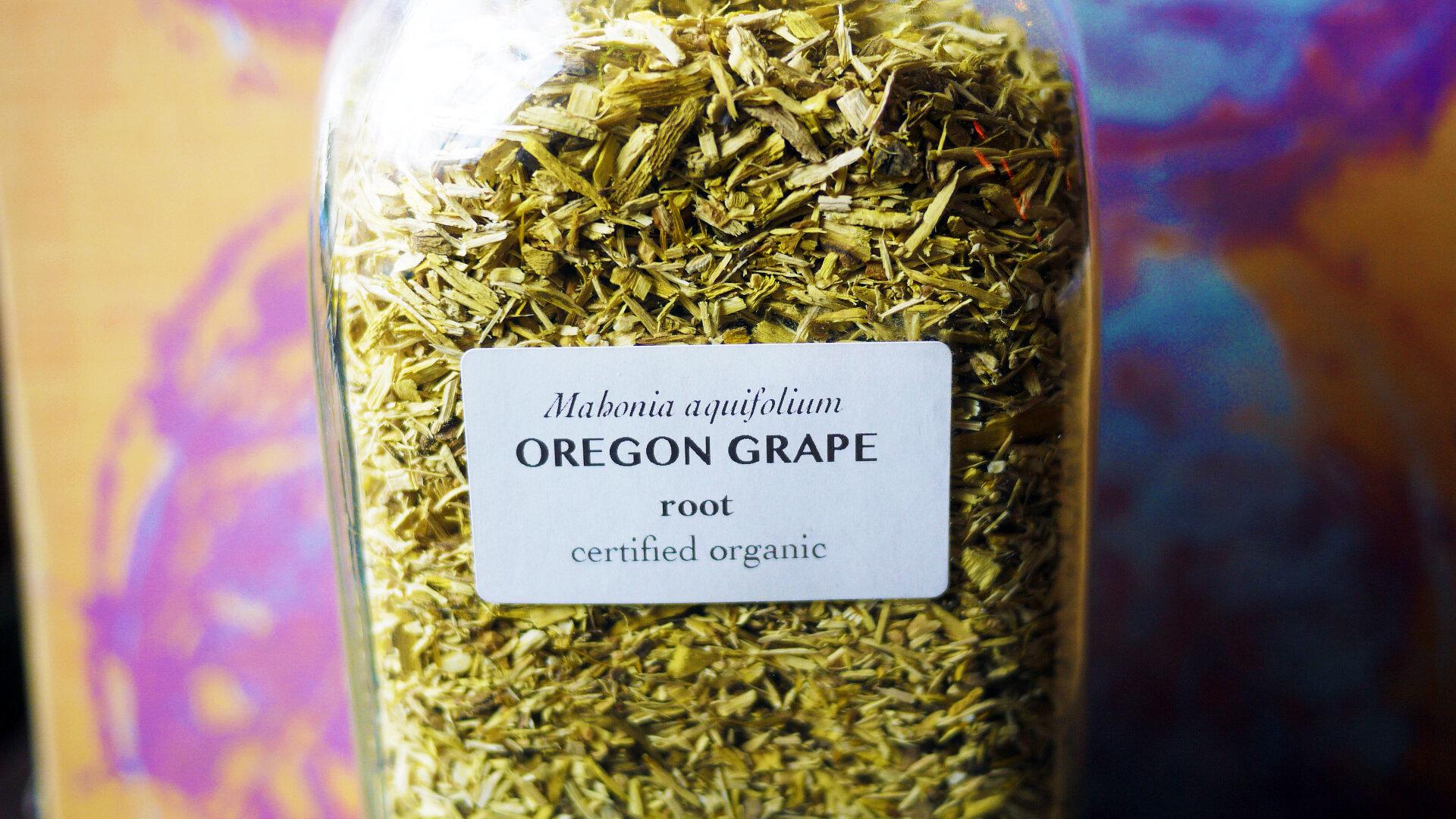 Oregongraperoot.jpg