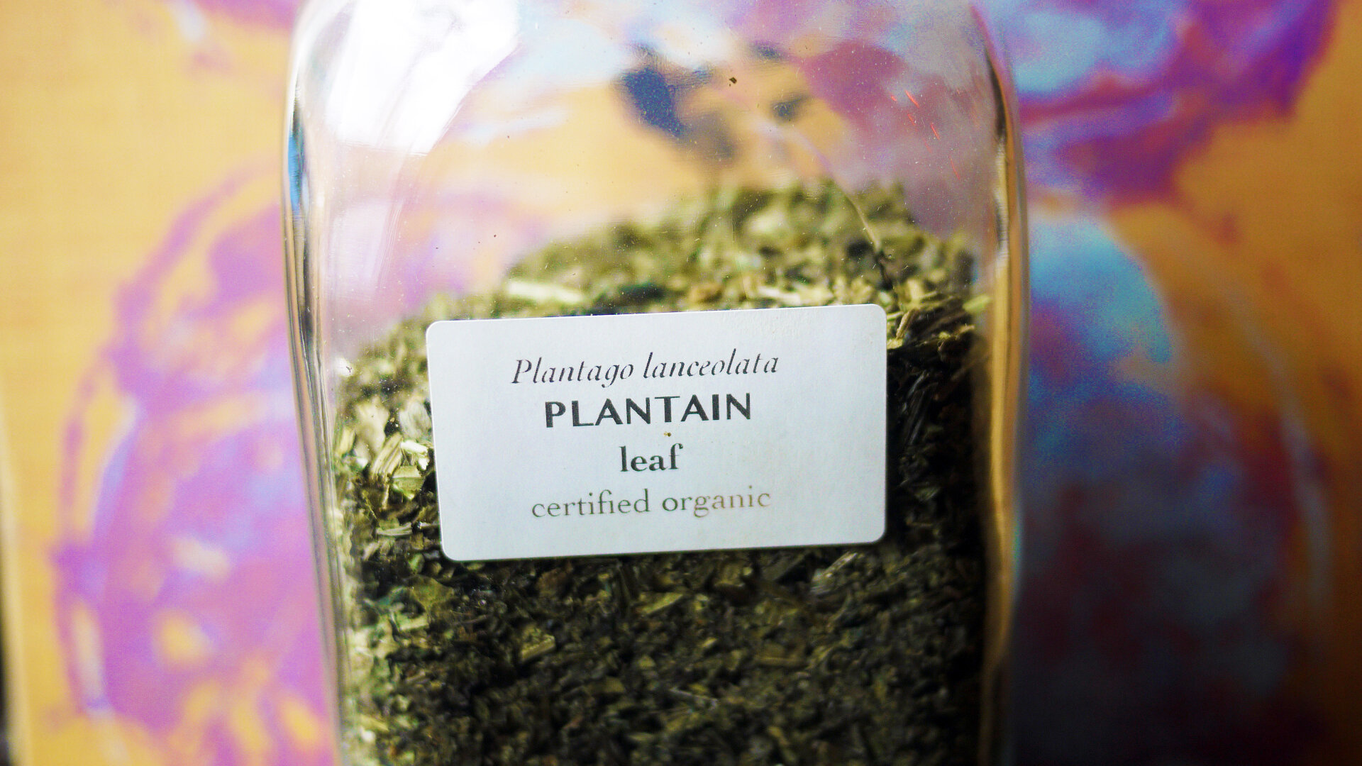 Plantainleaf.jpg