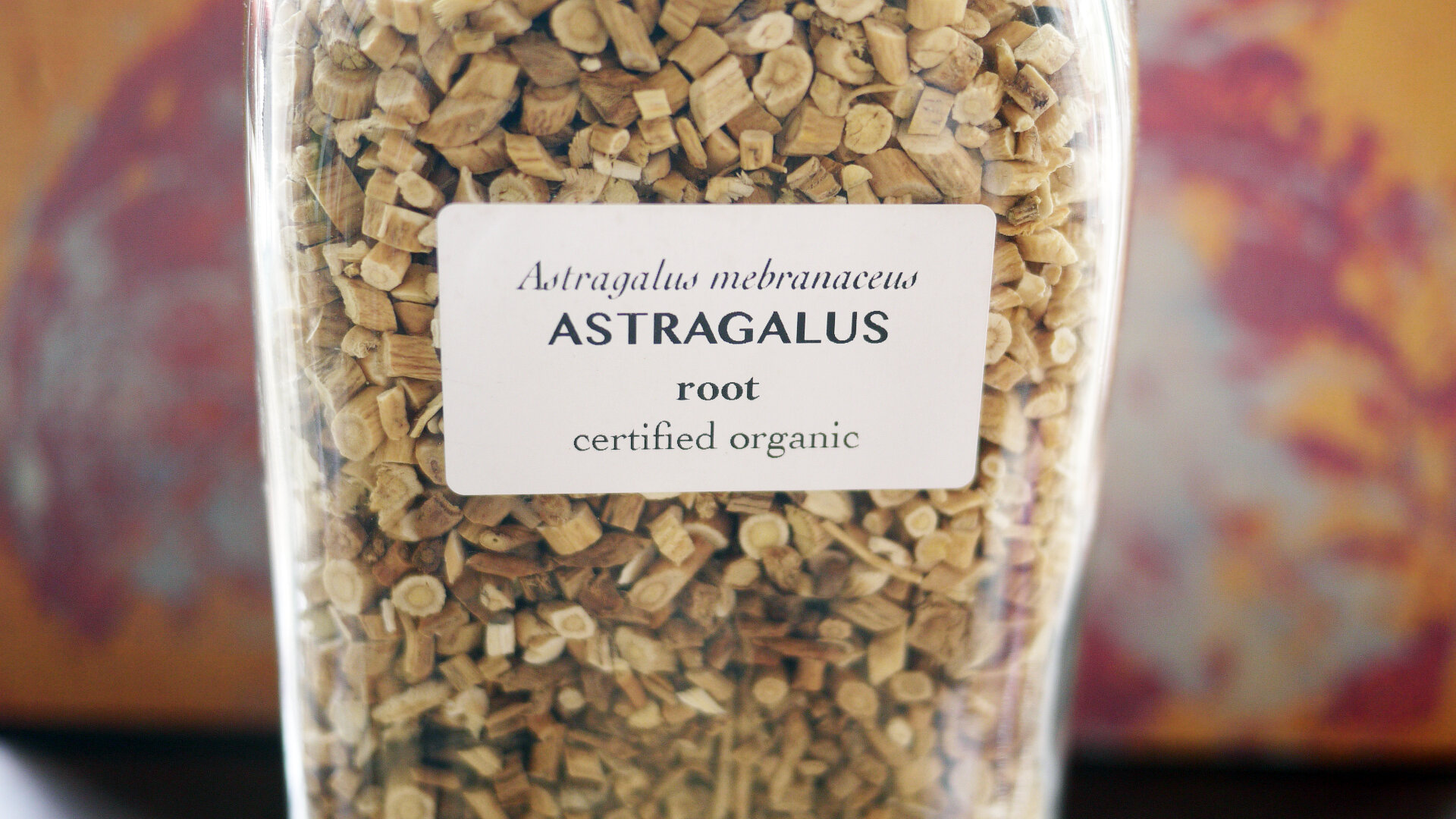 Astragalusroot.jpg